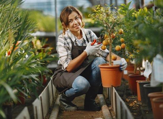 Jardinier G3F Pépinières dans serre agrumes et plantes méditerranéennes